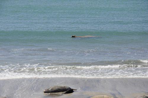 J+41 Plonger avec des lions de mer !